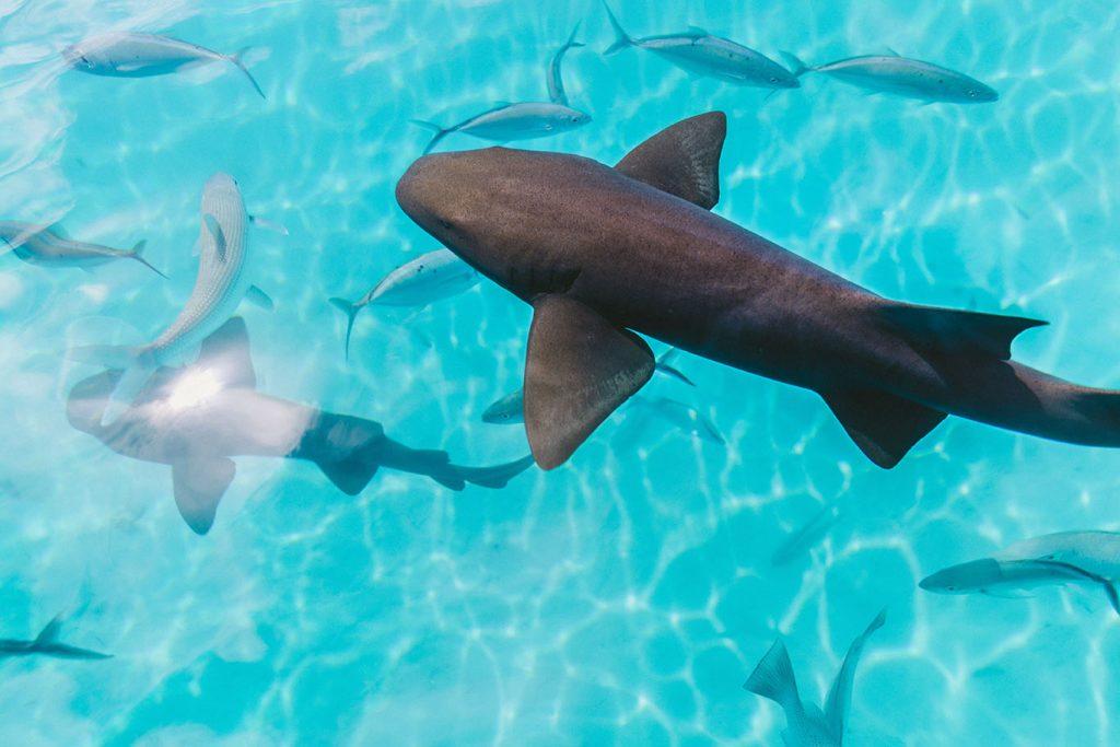 Requins et poissons de Tahiti