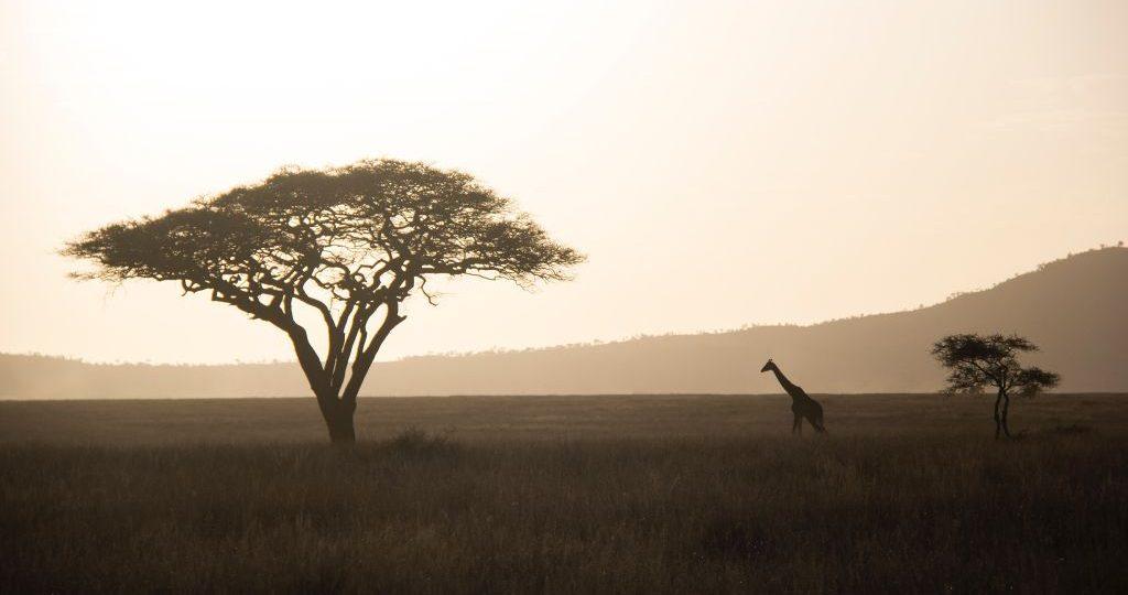 Tanzanie : Les incontournables